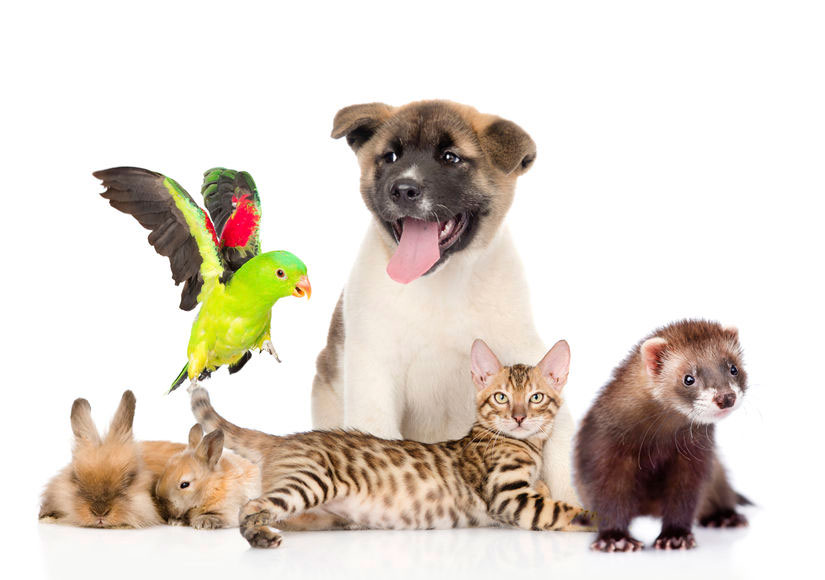 large group of pets Isolated on white background