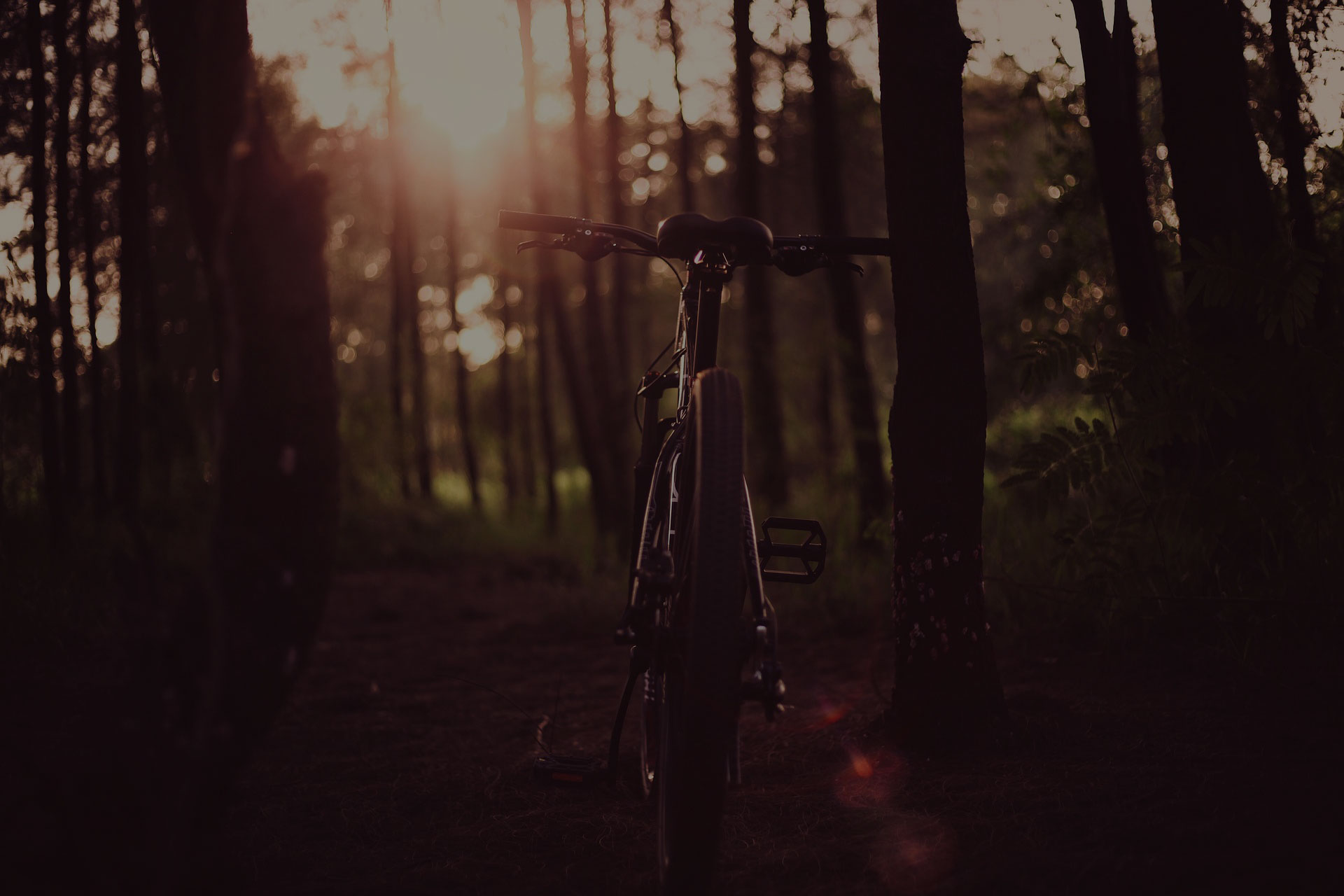 BiCycle in woods