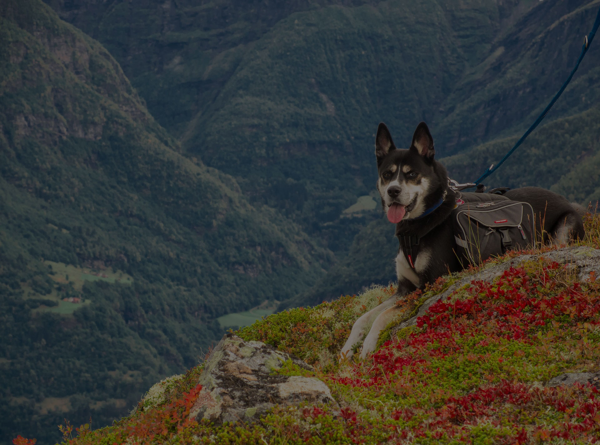 dog mountains hiking norway